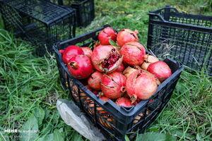درباره قیمت میوهها بزرگ نمایی میشود +جدول