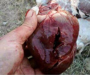 شکارچیان متخلف، حامیان محیط زیست را به قتل تهدید کردند