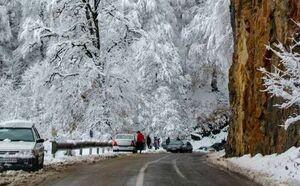 عکس/ طبیعت برفی جاده جنگلی دالخانی