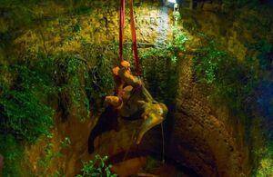 عکس/ نجات یک فیل از چاه