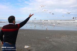 غذا دادن به پرندگان در روزهای سرد زمستانی