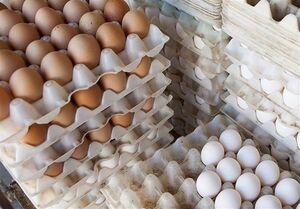 پاسکاری گرانی مرغ و تخم مرغ؛ شانهای ۴۰ تومان ناقابل!