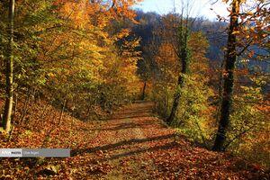 عکس/ پاییز هزار رنگ در جنگلهای علی آباد کتول