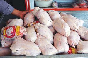 استقرارماشینهای ترازودار در میادین تره باربرای تسریع درتوزیع مرغ