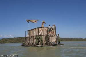 عکس/ نجات زرافه از میان سیلاب