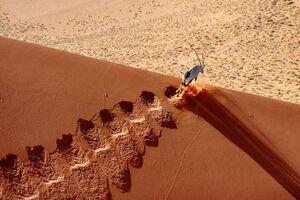 تصویری زیبا از حیات وحش نامیبیا