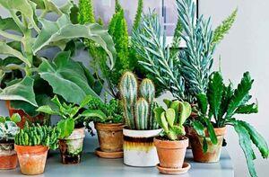 ترفندهایی برای درمان بیماری گیاهان