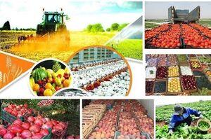 ابلاغ قانون اصلاح خرید تضمینی محصولات کشاورزی