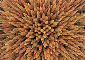 تصویر هوایی جالب از درختان در پاییز