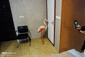 حبس فلامینگوها در دستشویی!+ عکس