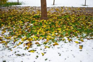 امروز در کدام نقاط کشور برف میبارد؟