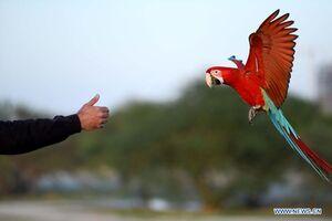 عکس/ ببینید چه طور طوطیها را آموزش میدهند