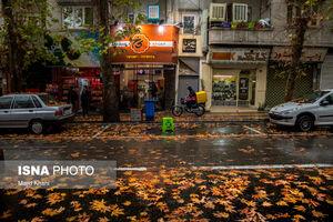 عکس/ برگریزان پاییز در خیابانهای تهران