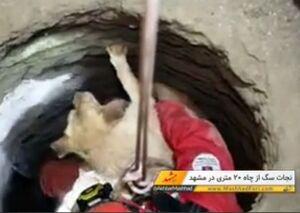 نجات سگ از چاه بیست متری در مشهد