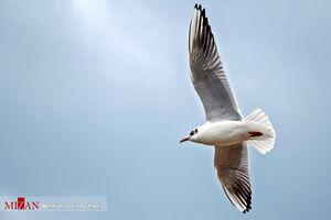 عکس/ مرغان دریایی در سواحل آستارا