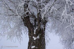 حیات وحش وابسته به یک درخت +فیلم