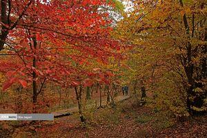 عکس/ جنگل پاییزی النگدره