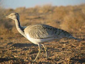 ثبت لحظات زیبا از غذاخوردن پرندۀ درخطر انقراض +فیلم