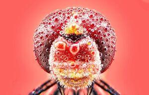 عکس/ برگزیدگان رقابت عکاسی «آگورا»