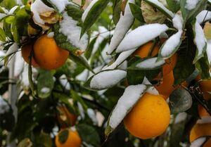 هشدار مهم سازمان هواشناسی به کشاورزان ۱۵ استان