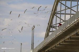 مسافران پل سفید