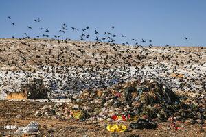 عکس/ دود زبالهها در چشم طبیعت