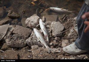 عکس/ تلف شدن هزاران ماهی رودخانه راوند اسلام آباد