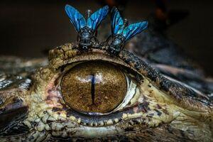 تصویری دیدنی از چشم تمساح