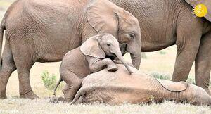 عکس/ بچه فیلهای بازیگوش