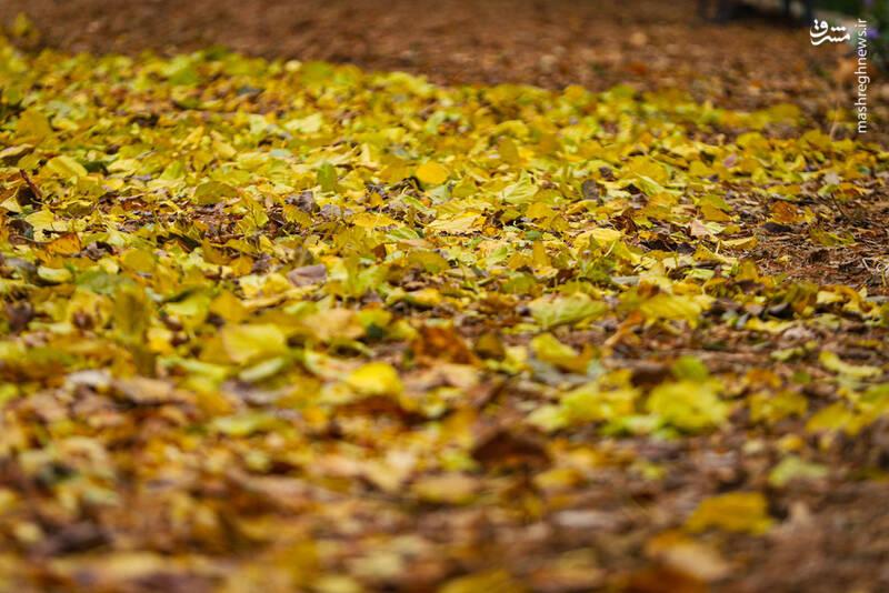 عکس/ رخت پاییز بر تن بوستانهای
