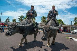 عکس/ گشت زنی پلیس سوار بر بوفالو