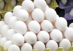 قیمت شانه تخممرغ معادل یارانه یک ماه! / سنگینی گرانی روی شانههای تخممرغ