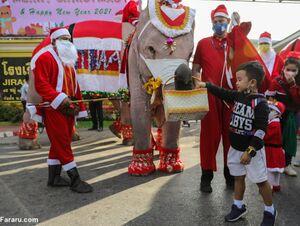 عکس/ هدیه کرونایی فیلها به کودکان