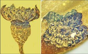 یک گل ۱۰۰ میلیون ساله کشف شد