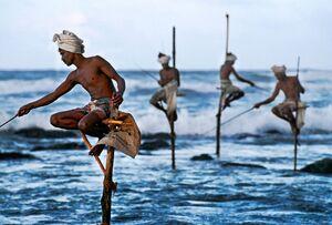 عکس/ شیوه عجیب ماهیگیری در سریلانکا