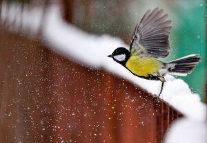 پرواز در برف