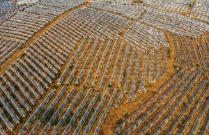 نمای هوایی درختان میوه پوشیده شده با پلاستیک در چین