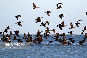کوچ پرندگان مهاجر به هرمزگان