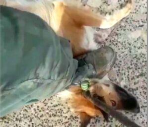 ۷۴ ضربه شلاق برای سگکشی در گیلان