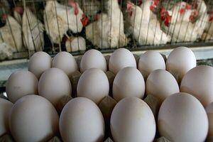 تخم مرغ بالاتر از شانهای ۳۴ هزار تومان گرانفروشی است