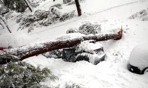 عکس/ بارش برف بیسابقه اسپانیا را فلج کرد