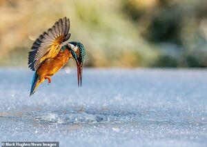 عکس/ شکار از دریاچه یخ زده