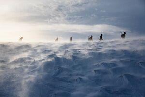 ارتفاعات سفید پوش اسکاتلند