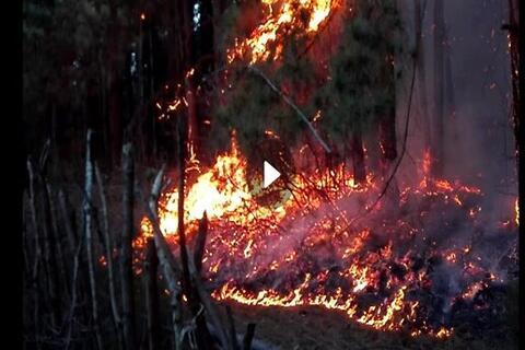 فیلم/ گزارشی از دل آتشهای جنگل گیلان