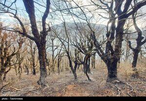 آتشی که به جان جنگلهای گیلان افتاد