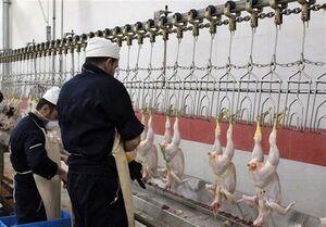 مرغداران در هر کیلو مرغ ۵هزار تومان ضرر میکنند