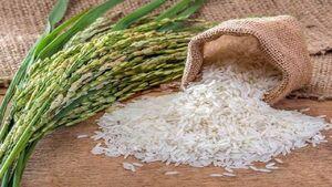 فیلم/ کتاب پر ماجرای برنج به فصل سختش رسید
