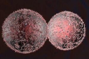 کاهش احتمال ابتلا به سرطان با این «قرص»