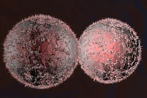 کاهش احتمال ابتلا به سرطان با این «قرص» - کراپشده