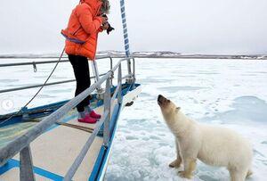 عکس/ تلاش خرس کنجکاو برای سوار شدن بر روی قایق